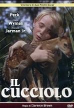 Il cucciolo - dvd - Clarence Brown | DVD | Itacalibri